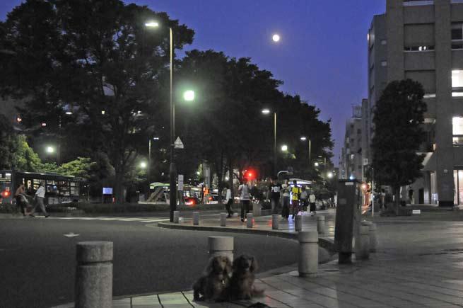 中秋の名月背景.jpg